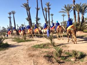dromadaires marrakech