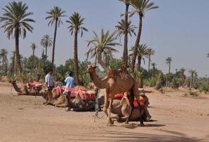 balade dos chameau marrakech maroc